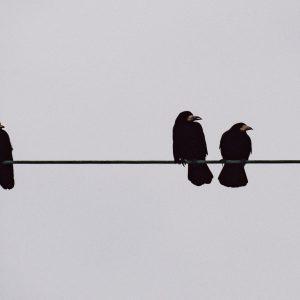 Crow Funeral – Alex Reece Abbott